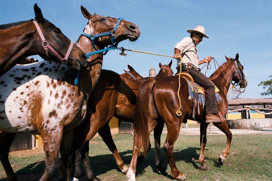 L'entraînement des chevaux au Polo Club, devant les écuries.