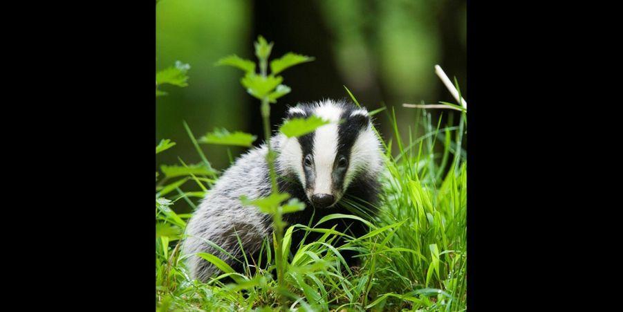 Le petit animal profite d'un instant de répit, protégé par la verdure environnante. (voir l'épingle)Suivez nous sur Pinterest !