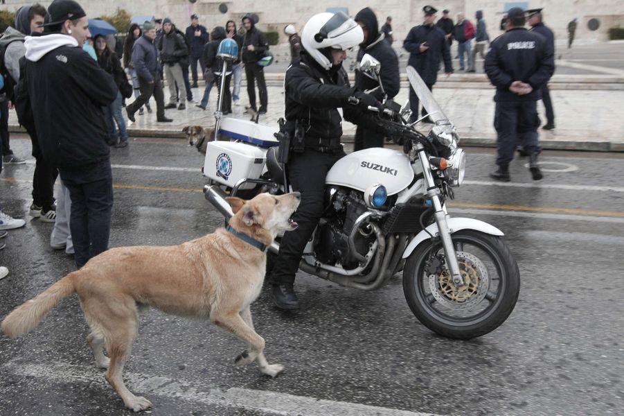 Loukanikos dans une manifestation à Athènes le 20 février 2012