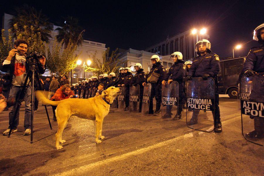 Loukanikos dans une manifestation à Athènes le 3 novembre 2011