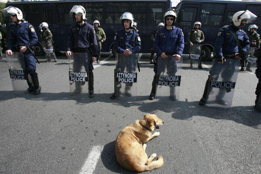 Loukanikos dans une manifestation à Athènes le 4 mars 2009
