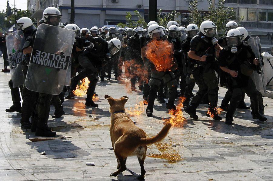 Loukanikos dans une manifestation à Athènes le 4 octobre 2011