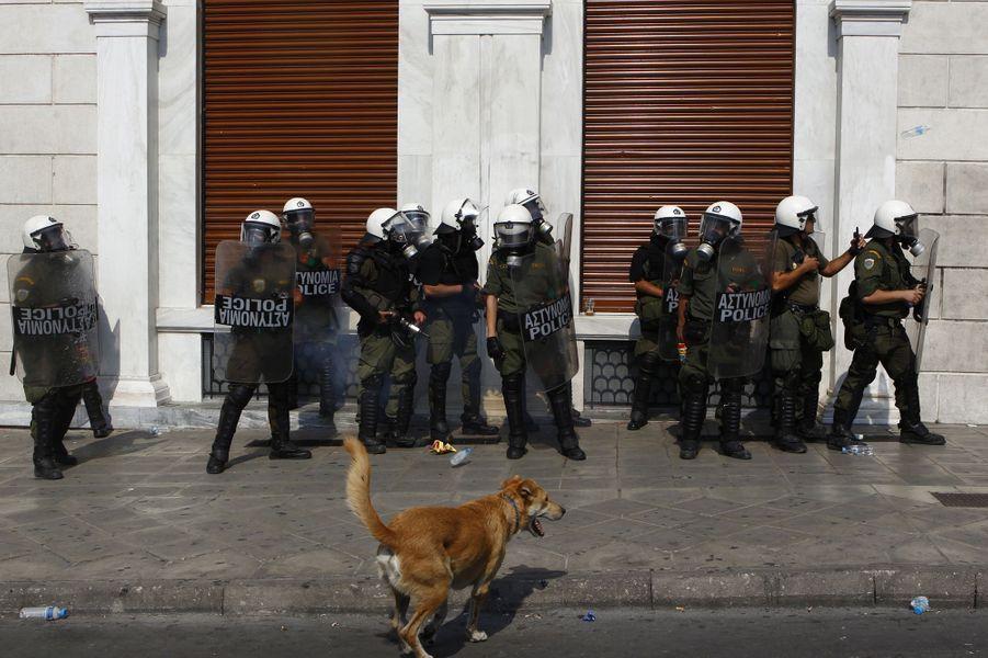 Loukanikos dans une manifestation à Athènes le 5 octobre 2011