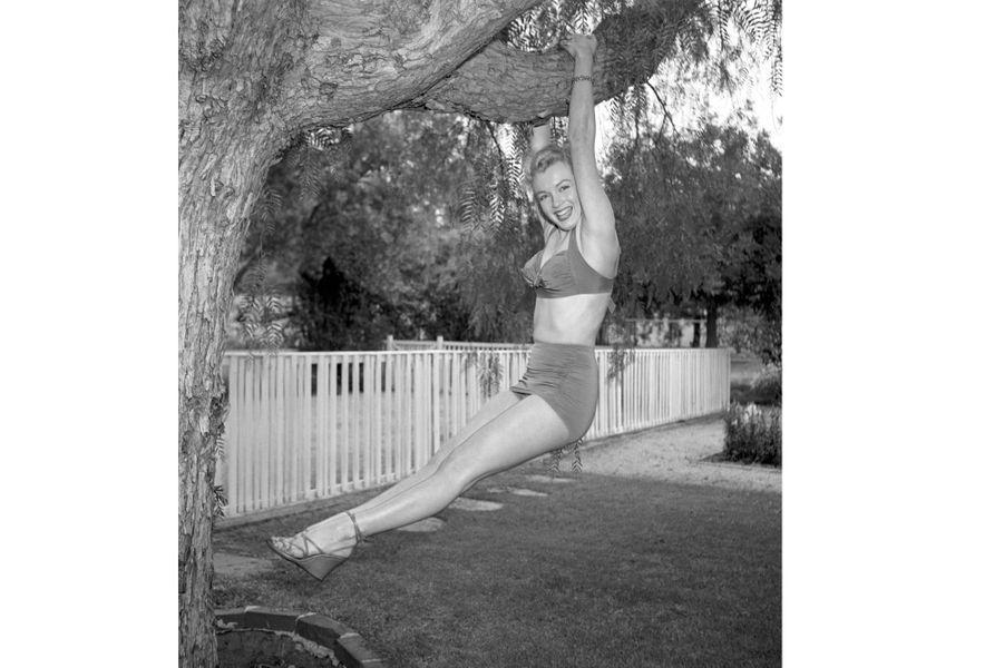 Marilyn se balance à un arbre dans le jardin de son impresario Johnny Hyde, le 17 mai 1950