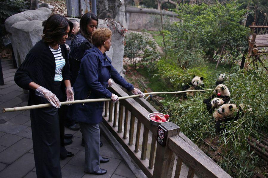 Au centre de recherche sur le panda