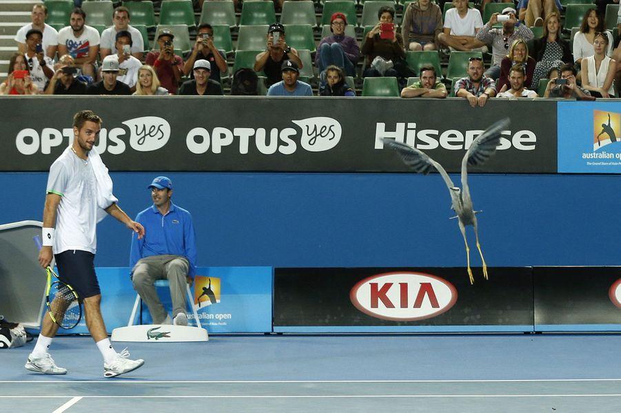 Un oiseau s'est lui invité sur le court lors de la rencontre entre Viktor Troicki et Daniel Munoz de la Nava lors de l'Open d'Australie.