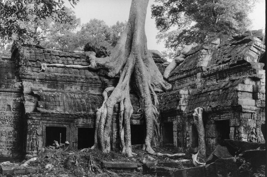 Des trésors de pierre taillés dans la dentelle, témoins et vestiges d'une civilisation khmère au raffinement extrême, enfouis depuis des siècles sous les organes d'une nature qui a repris ses droits. Les temples d'Angkor sont exhumés de la végétation luxuriante et de l'oubli en 1860 par l'explorateur français Henri Mouhot. Les 400 kilomètres carrés d'histoire et de joyaux archéologiques, comme le gigantesque temple Angkor Vat, inscrits au Patrimoine mondial de l'Unesco en 1992, racontent la grandeur et le rayonnement d'un empire qui subjugue encore les millions de visiteurs. Pour célébrer la 1000e photo exposée dans la grande galerie de Paris Match, la rédaction vous propose six clichés intemporels.