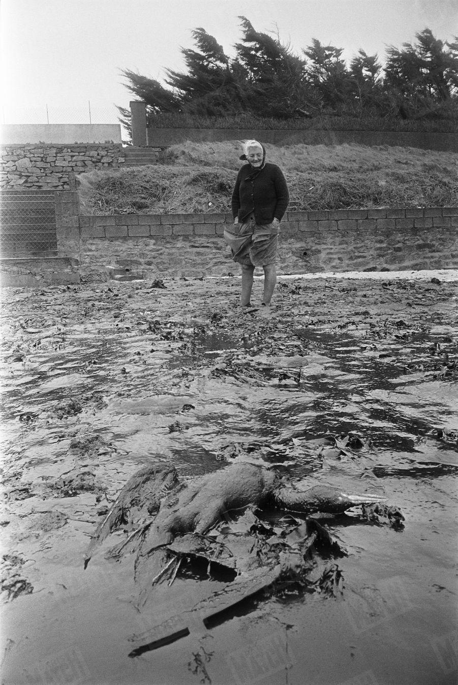 Marie-Jeanne Salou, Bretonne de 69 ans, devant un oiseau mort sur la plage polluée de Kersaint, près de chez elle, le 19 mars 1978. Trois jours plus tôt, le pétrolier géant Amoco Cadiz, immatriculé au Libéria et affrété par la compagnie américaine Amoco Transport, s'est échoué sur les rochers de Men Goulven, au large du village de Portsall, en Bretagne. Les cuves brisées déversent dans la mer 227 000 tonnes de pétrole brut, auxquelles s'ajoutent 3 000 tonnes de fuel, provoquant une gigantesque marée noire sur plusieurs centaines de kilomètres le long des côtes bretonnes.