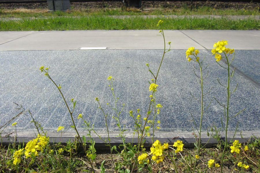 SolaRoad, la piste cyclable qui génère de l'électricité
