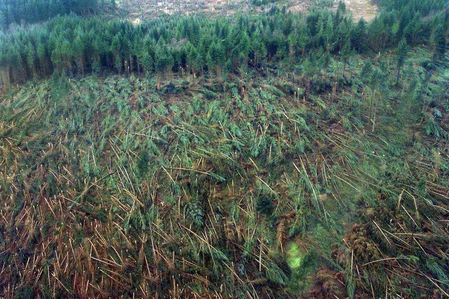 Les dégâts causés par la tempête dans la forêt des Vosges, en décembre 1999.