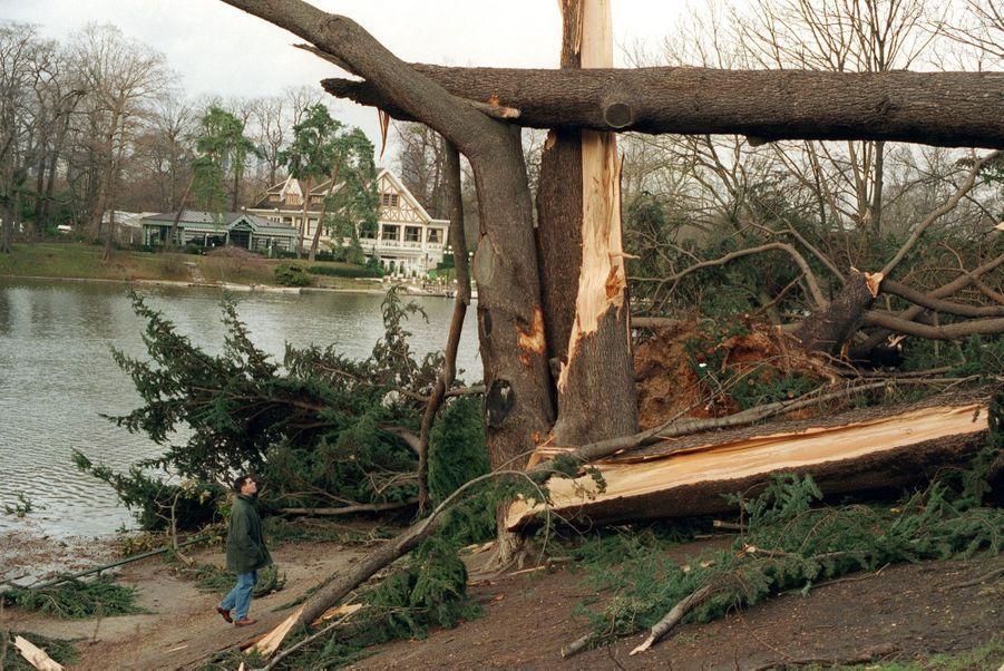 « Autour du lac du bois de Boulogne, face au Châlet des îles, des troncs vénérables se sont brisés comme de simples brindilles. Il faudra trois ans pour effacer les dégâts, un siècle entier pour que les frondaisons retrouvent leur splendeur. » - Paris Match n°2641, 6 janvier 2000.