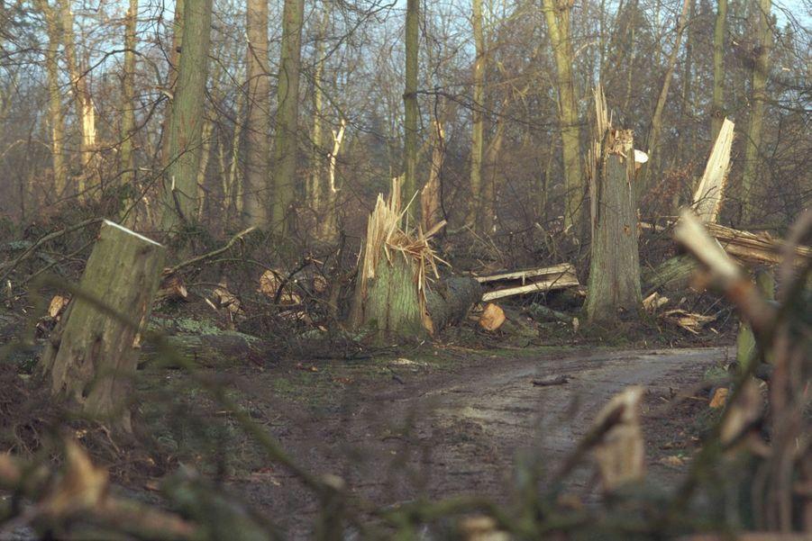 «Déjà en février 1990, on pensait que le pire était arrivé : 1500 arbres sur l'ensemble de 60 000 avaient été détruits par la tempête. Mais c'était six fois moins qu'aujourd'hui. Depuis ce premier crime de lèse-majesté, la République avait entrepris de rendre son lustre au parc du Roi-Soleil. Elle a consacré chaque année de 7 à 10 millions de francs à la restauration de ses 600 hectares. Les bosquets du «petit parc» avaient été particulièrement choyés. Ils dessinaient l'itinéraire des promenades de Louis XIV. De nombreux mécènes avaient aussi apporté leur concours pour que les jardiniers de Versailles puissent fêter dignement, dès l'an 2000, le trois centième anniversaire de la mort de Le Nôtre, leur maître. Une tempête en a décidé autrement.» - Paris Match n°2641, 6 janvier 2000.