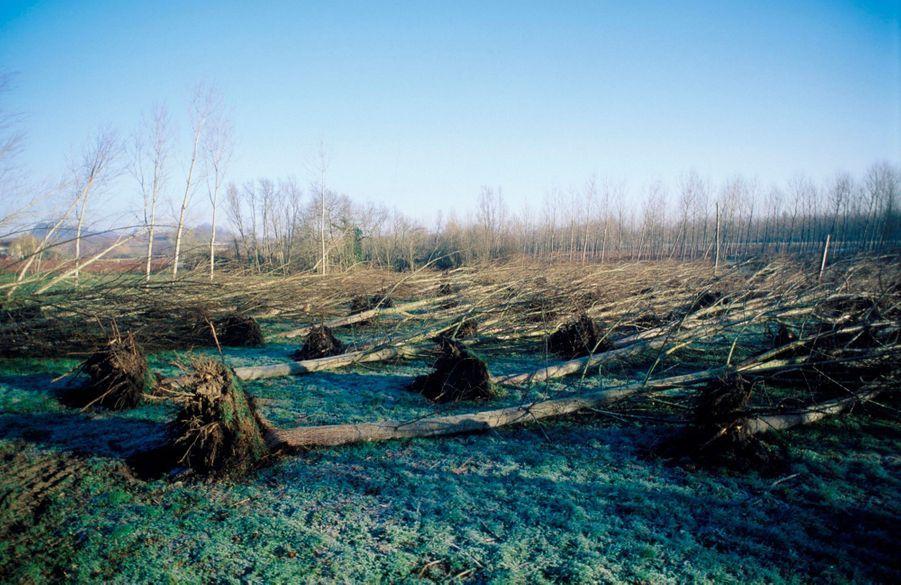 Les dégâts causés par la tempête à Fronsac, en Gironde, en décembre 1999.