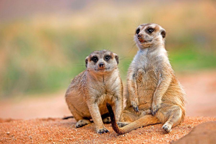 La Namibie a droit à sa faune sauvage