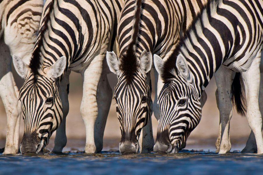 La Namibie est aussi l'occasion de partir pour un safari