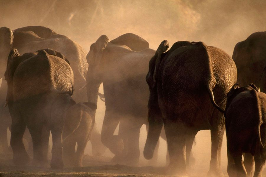Le Botswana renferme une faune fascinante