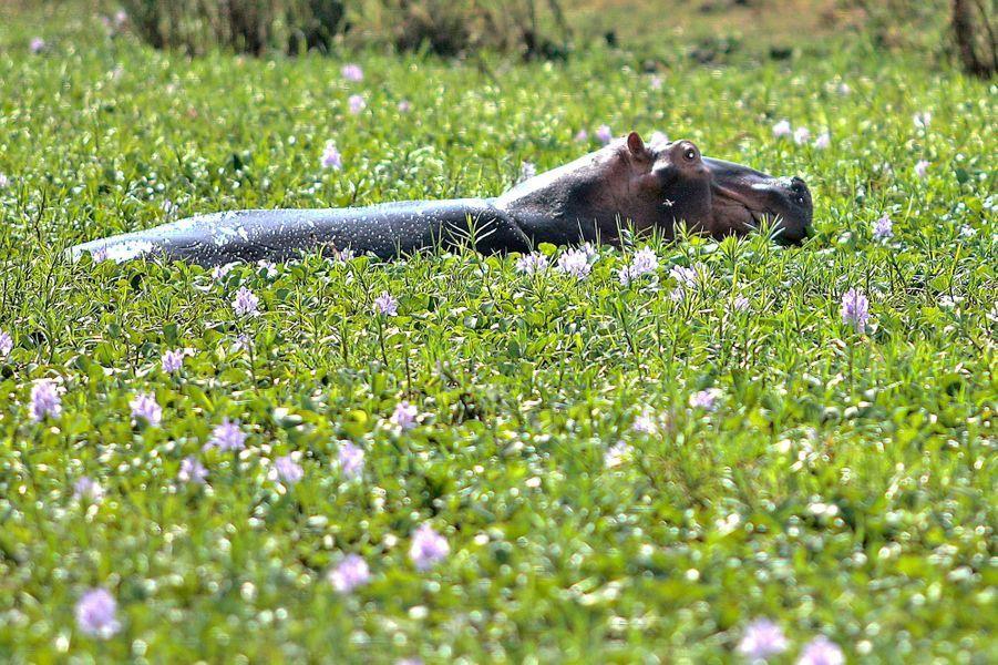 Le Malawi et ses magnifiques animaux