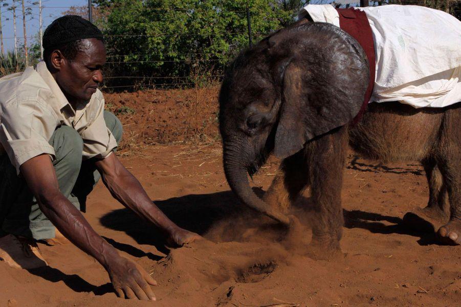 Les éléphants du Malawi