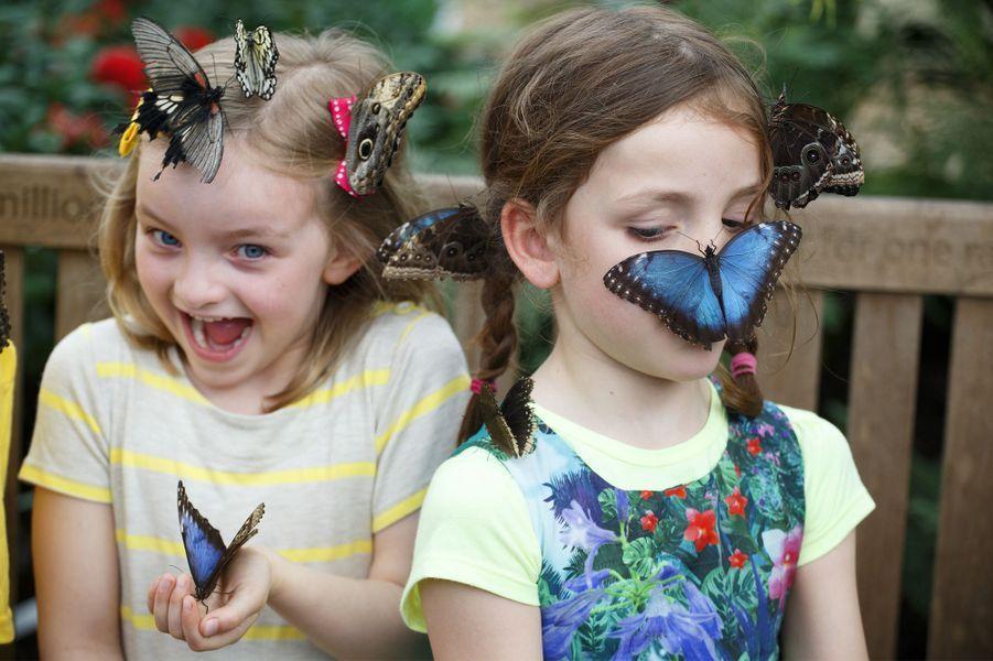 Le Museum d'histoire naturelle de Londres a fait une exposition de ses quelque 500 papillons, qui n'ont pas hésité à se poser sur de jeunes spectatrices.