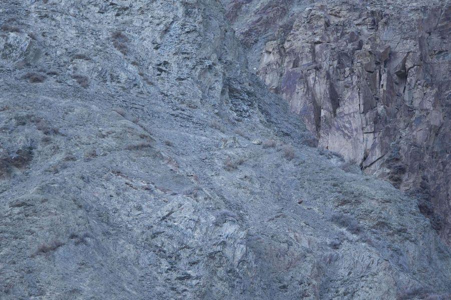 Quelque part dans ces paysages himalayens se cachent des léopards des neiges, qui sont au règne animal ce que Greta Garbo était à Hollywood: une star cachée. Les fauves, immortalisés par l'Irlandais David Jenkins après des semaines de traque par des températures glaciales, sont à peine visibles sur les clichés.