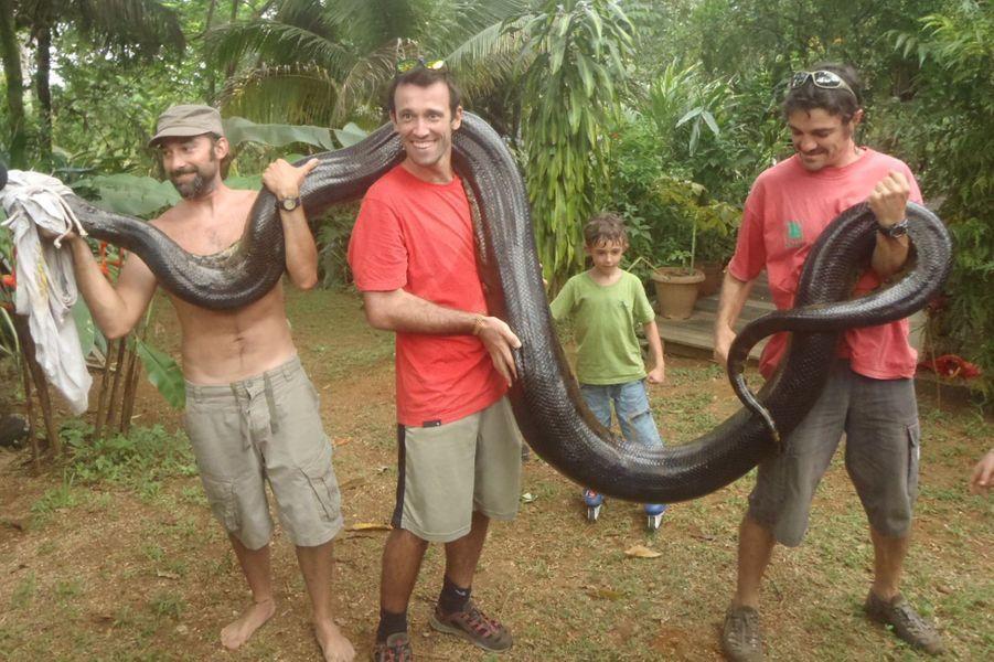 """A Montsinéry, en Guyane, le Français Sébastien Bascoules a «réalisé un rêve»: il a capturé un anaconda long de plus de 5 mètres, quelques heures après que l'animal se soit faufilé chez un de ses amis pour y manger son chien. «Au début, je n'avais pas peur car je le pensais plus petit que ça, a expliqué le professeur de mathématiques cité par le """"Daily Mail"""". J'ai été très surpris par sa force et sa longueur. Depuis que j'ai 10 ans, j'adore tenir des reptiles, mais celui-ci est le serpent le plus gros que j'aie vu et capturé.» Ils ont dû être deux pour le déplacer afin d'éviter tout risque. Les événements se sont déroulés l'an dernier mais n'ont été révélé que cette semaine.Pesant près de 80 kilos, le reptile a été transporté, un t-shirt sur la tête, dans le coffre d'un 4x4. Il a passé la nuit dans la baignoire familiale: «Ma femme avait peur qu'il s'échappe de la salle de bain pendant la nuit. Mais nous n'avions rien à craindre car il était aveuglé et était donc comme un gros ver.»Sébastien Bascoules, qui vit en Guyane depuis une quinzaine d'années avec sa famille, a relâché l'anaconda une dizaine de kilomètres plus loin, près d'une rivière.Retrouvez ici le diaporama."""