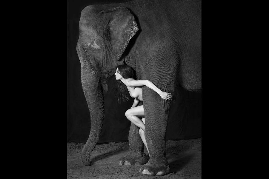 Dovima et les Elephants, par Vanessa von Zitzewitz