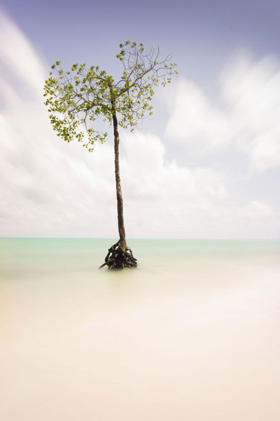 """Jean Dieres Monplaisir: Ce palétuvier solitaire témoigne de la reculée des mangroves avec la violence et le nombre accru de tempêtes tropicales. Cet écosystème fragile est également l'habitat d'une faune endémique indirectement menacée par ces changements climatiques.Chaque semaine, Paris Match sélectionne, sur le web et dans le magazine, vos plus beaux clichés pour la planète dans le cadre de son opération""""Ma Terre en photo"""".Vous aussi envoyez une photo pour la planète surwww.materre.photosParticipez au plus grand album photo de la planète pour l'environnement. Un arbre planté pour chaque photo envoyée !Vos images seront ensuite rassemblées dans un ouvrage qui sera remis à tous les chefs d'Etats et chefs de délégation lors de la Conférence des Nations unies sur le climat (COP21) qui se tiendra à Paris en décembre prochain."""