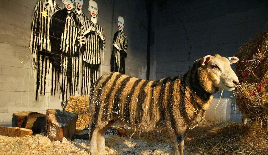 Lors de son exposition à Londres en 2003, Bansky avait mis en scène un mouton dans son enclos et décoré par des rayures noires peintes directement sur sa fourrure. Cela devait représenter «le miroir» des vêtements des prisonniers déportés lors de la Seconde Guerre Mondiale.