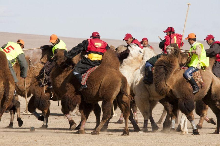 Paysage de Mongolie : match de polo en chameaux.