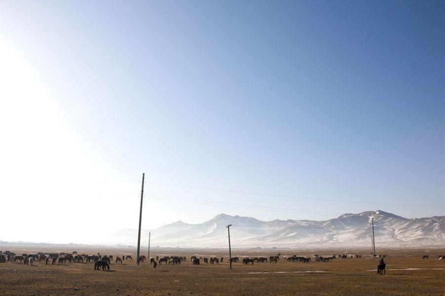 Paysage de Mongolie : chevaux dans la steppe mongole.