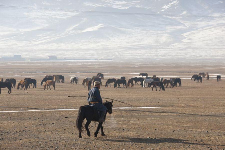 Eleveur de chevaux dans la steppe mongole.