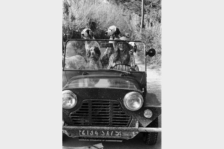 Brigitte Bardot avec ses chiens au volant de sa Mini Moke