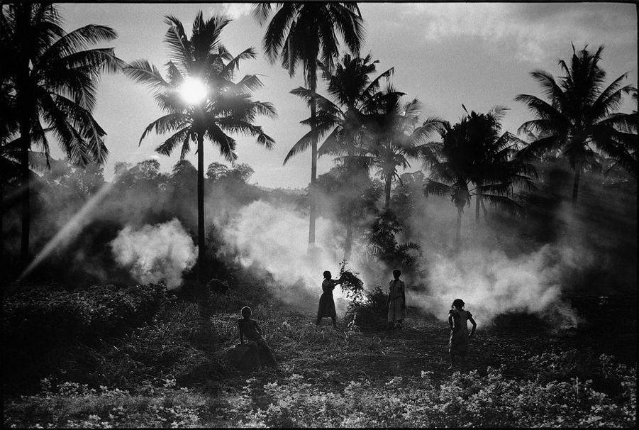 Les territoires d'Outre-Mer : l'île de Mayotte, par Benoît Gysembergh (1954-2013). A Mayotte, femmes au travail dans une cocoteraie. Décembre 1985.LOT N°088 - Tirage postérieur sur papier baryté - Edition 1/1 - 52 x 78 cm - Encadrement bois noir et passe-partout 5 cm tournant.