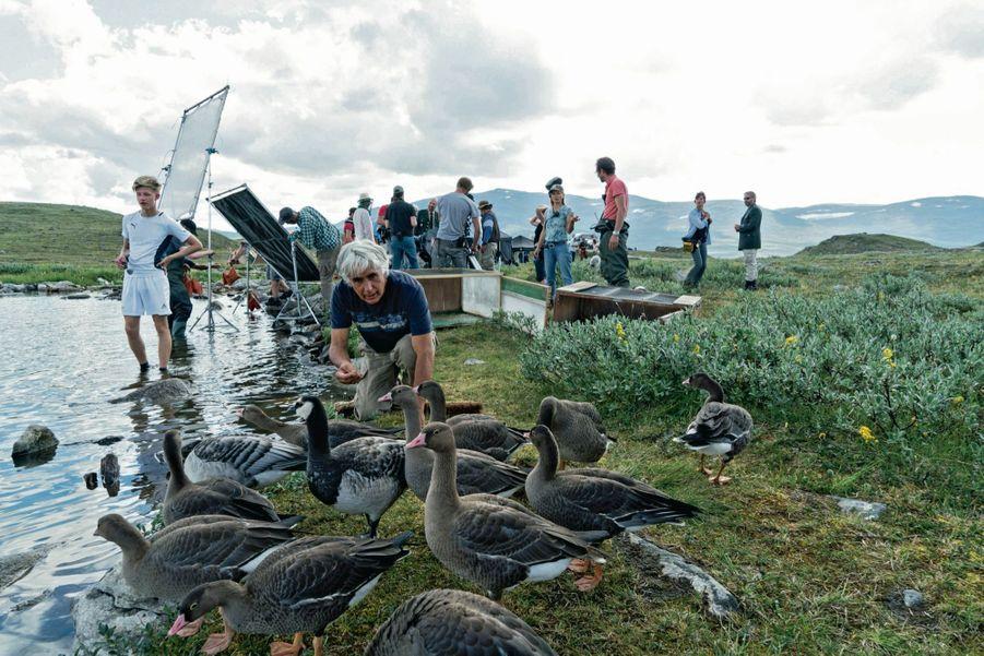 Fin juillet, sur les berges du lac norvégien Guolasjavri. Pour Christian Moullec et ses petits, c'est l'heure de la becquée.