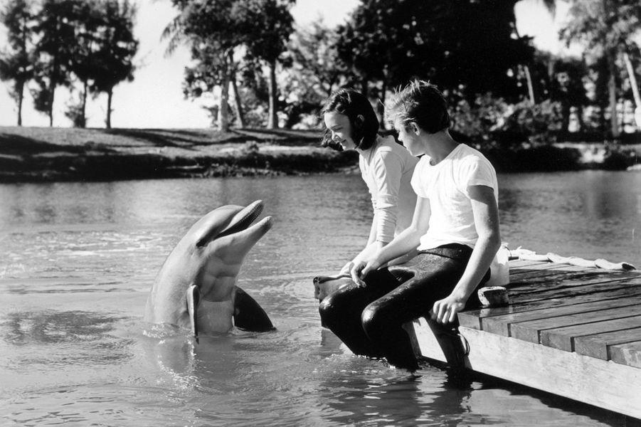 """Flipper le dauphin"" (1964-1967)"