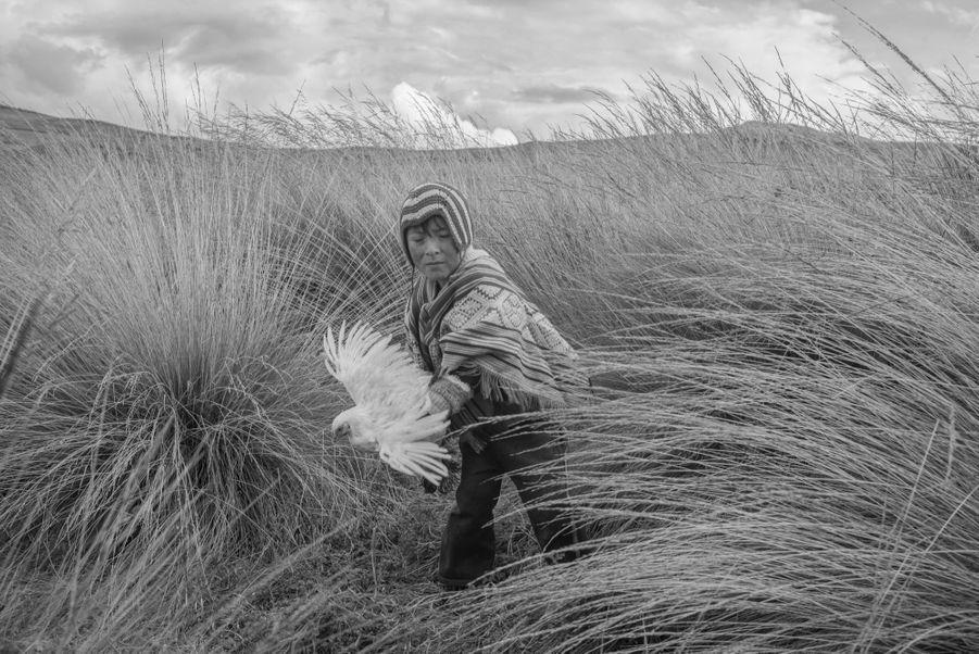 """PÉROU, UN ÉTAT TOXIQUE Le peuple quechua a une connexion particulière avec les terres agricoles qu'il habite et ses animaux. Le soin délicat qu'ils consacrent à l'agriculture consiste à parler à la terre en demandant les fortes pluies et une bonne récolte. Ensuite, ils danseront sur la """"Pachamama"""", la Terre Mère, avec passion et grande grâce pour exprimer leur gratitude. Cependant, leurs terres agricoles sont maintenant empoisonnées par la présence de métaux lourds, la tradition folklorique qu'ils entretenaient avec leur environnement est en train de disparaître."""