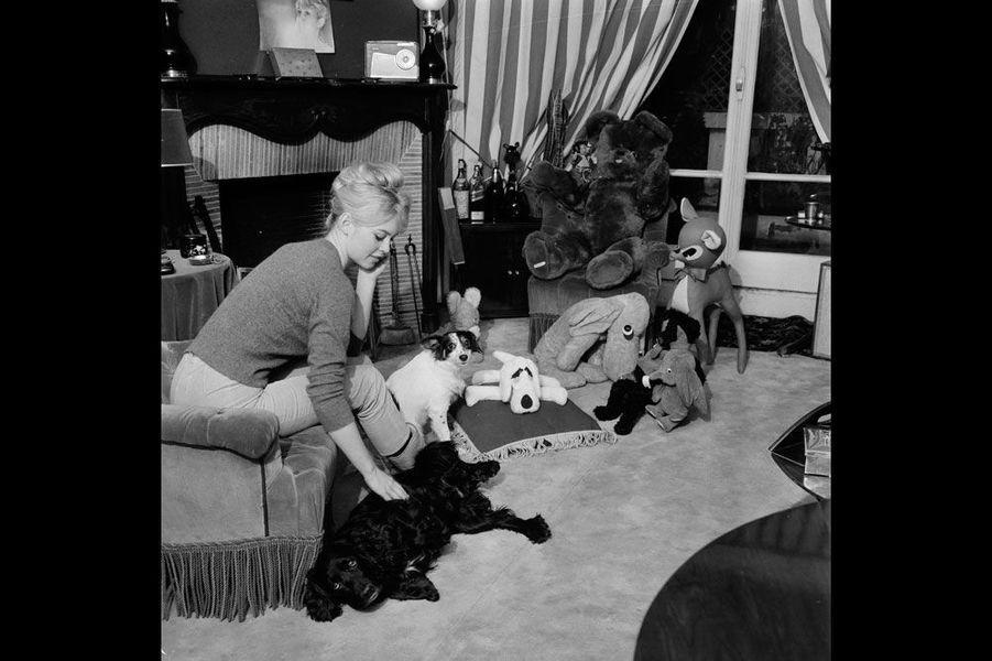 1959, le 19 janvier, portrait de la comédienne et chanteuse Brigitte BARDOT, chez elle : elle est assisie dans son salon, sur un canapé et caresse son chien, allongé sur le tapis. Des animaux en peluche sont disposés devant la fenêtre