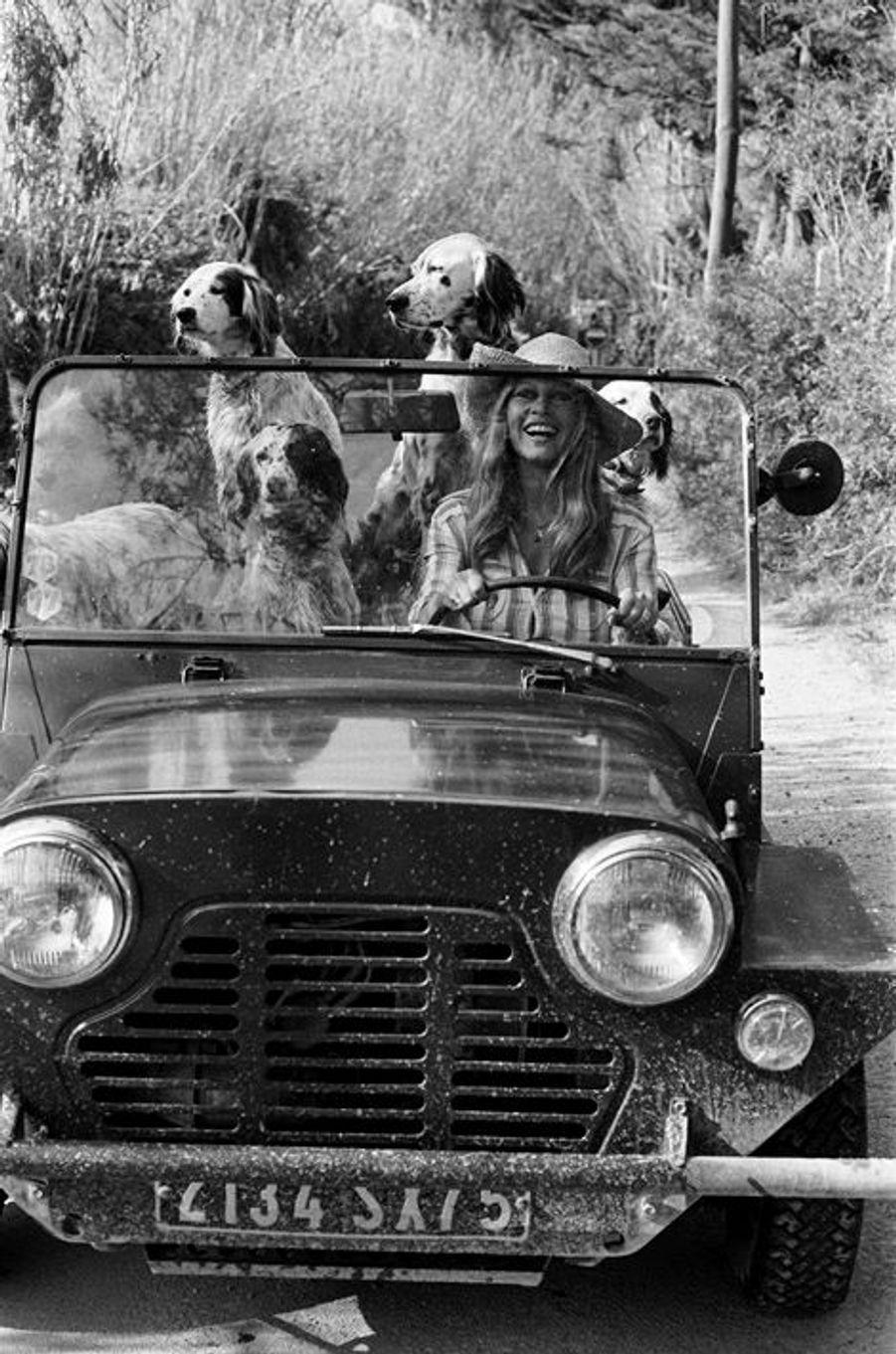 """Brigitte BARDOT avec ses chiens au volant de sa Mini Moke, à la """"Madrague"""". BB a accepté d'être filmée par son ami A. Bougrain-Dubourg pour l'émission d' Antenne 2 """"Les animaux et les hommes"""". Avril 1980."""