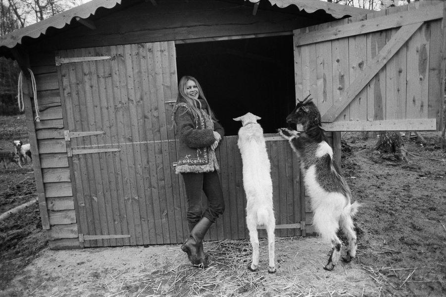 Brigitte BARDOT et ses animaux dans sa propriété de Bazoches. ici avec ses chèvres. Mars 1980.