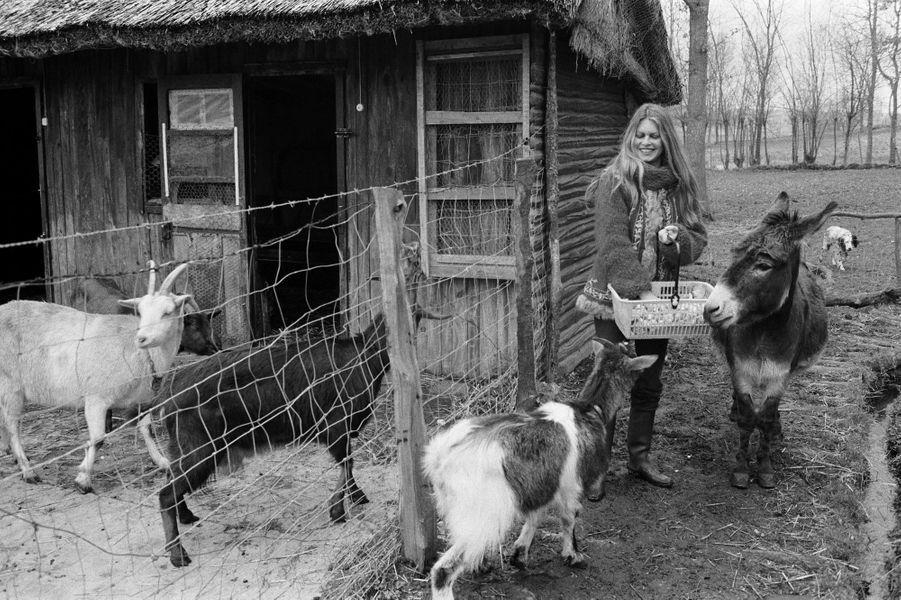 Brigitte BARDOT et ses animaux dans sa propriété de Bazoches. Ici avec ses chèvres et son âne. Mars 1980.