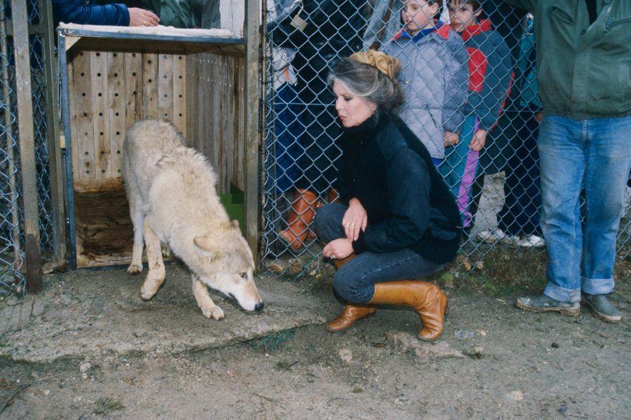 Brigitte BARDOT installe dans le parc animalier de Marvejols, à Sainte-Lucie, en Lozère, 80 loups qui croupissaient dans un zoo de Budapest en Hongrie. Mars 1991.
