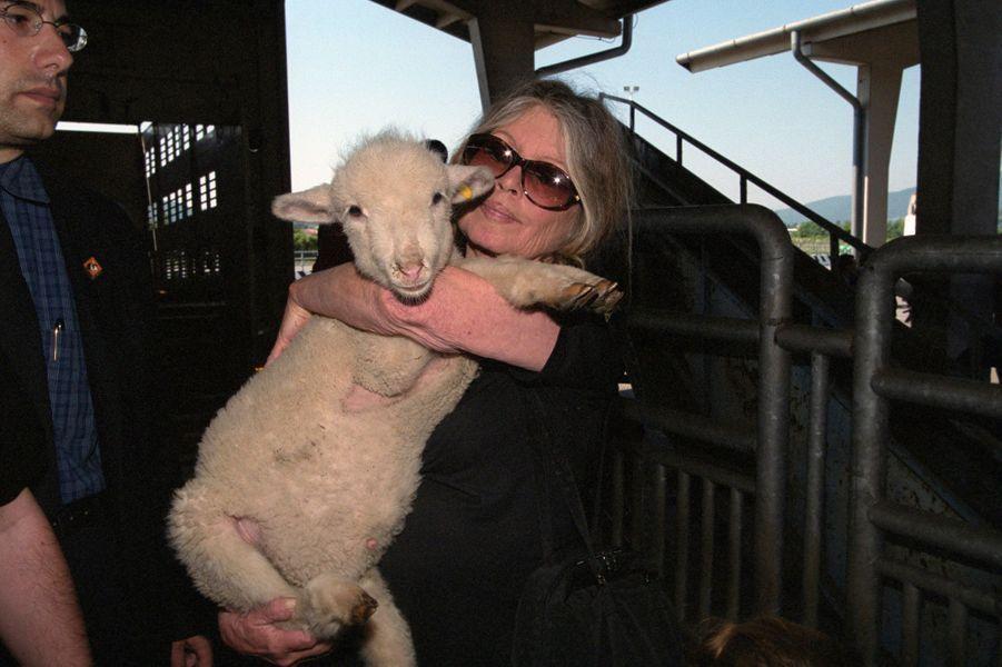 En Italie, en juin 2000, Brigitte BARDOT au nom de sa fondation lance sa campagne pour limiter la durée des transports des animaux de boucherie. Dans une ferme italienne, Brigitte BARDOT serrant fort dans ses bras un agneau.
