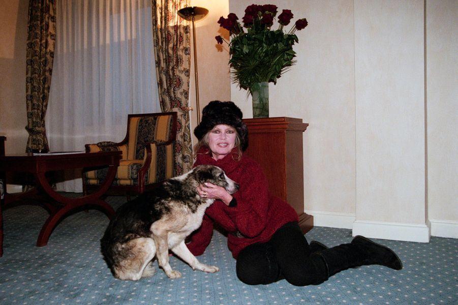"""Roumanie, Bucarest, février 1998, l'actrice et chanteuse française Brigitte BARDOT a créé en 1986 la Fondation Brigitte-Bardot (FBB), vouée à la protection des animaux. Elle vient plaider la cause animale, en réponse à l'appel au secours des association locales. Ici dans sa chambre, elle pose avec un des chiens qu'elle vient d'adopter, un corniaud estropié nommé """"Rantanplan""""."""