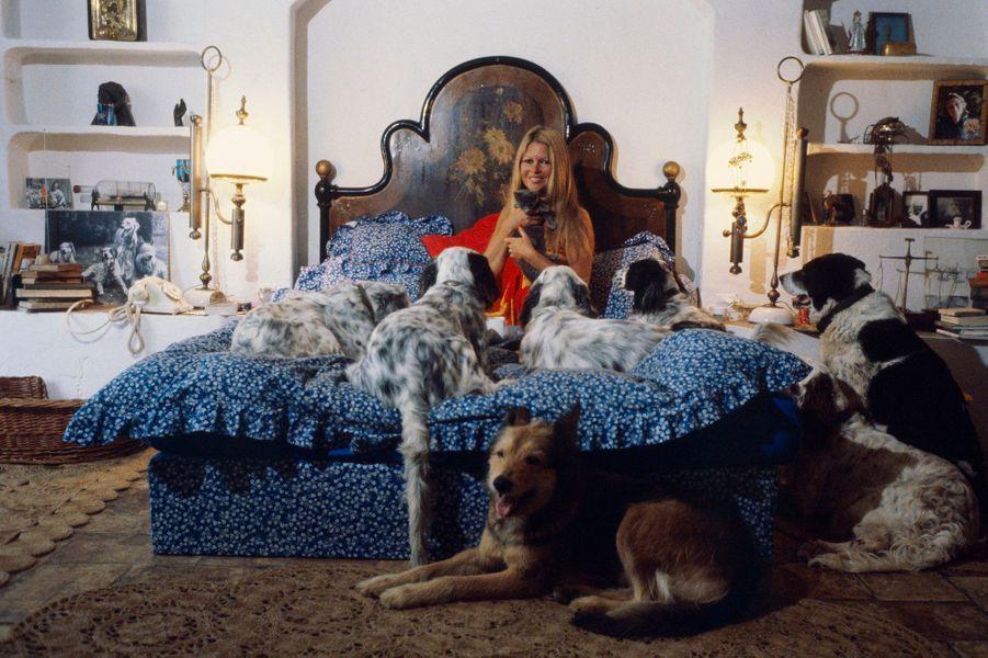 « Gamine, je ne rêvais pas d'être actrice mais danseuse étoile. Je voulais acheter une ferme pour y soigner des animaux malades. » Cette volonté tenace, Brigitte Bardot l'a accomplie après être devenue la légende BB. Après avoir secouru des animaux durant la première partie de sa carrière, elle s'engagera pleinement pour la cause animale. Elle adopte un âne pendant « Les bijoutiers », un canard et un chien pendant « Viva Maria ! », une chèvre pendant « Colinot » et vit au milieu d'une véritable arche de Noé. Découvrant l'horreur des abattoirs, elle milite auprès de Roger Frey, ministre de l'Intérieur, pour le pistolet électrique. Et annonce son engagement lors de la plus importante émission de télévision d'alors, « 5 colonnes à la une ». Le pays découvre la plus célèbre des stars de la planète en larmes, réclamant moins de cruauté à l'encontre des animaux. Brigitte déclare qu'elle a certes porté de la fourrure, mais qu'elle était conne et qu'elle cesse de manger les animaux, bourrés de toxines, pour ne pas digérer leur agonie. 'autres horreurs l'écœurent : chasse, vivisection, expérimentations, corrida, gavage des oies et des canards, toutes les formes d'abattage, massacres, présence d'animaux dans les zoos et les cirques.Au firmament de sa beauté et de sa célébrité, comprenant confusément qu'il faut savoir se retirer à temps et surtout désireuse de venir en aide à la détresse animale, elle choisit d'arrêter le métier. Passant devant une glace lors du tournage de « Colinot trousse-chemise » à Sarlat, elle ne rit pas de se voir si belle en ce miroir. Se trouvant ridicule en costume de châtelaine moyenâgeuse, en une seconde elle choisit de décrocher. « Je me suis vue, je n'étais plus ce que j'étais. J'ai pensé que cela suffisait. » Se tournant vers son agent et amie Olga Horstig, elle lui enjoint de ne plus accepter aucun scénario. C'est son dernier film. En 1973. A la veille de ses 40 ans. Les agents de Marlon Brando proposent 1 million de dollars pour tourner avec l