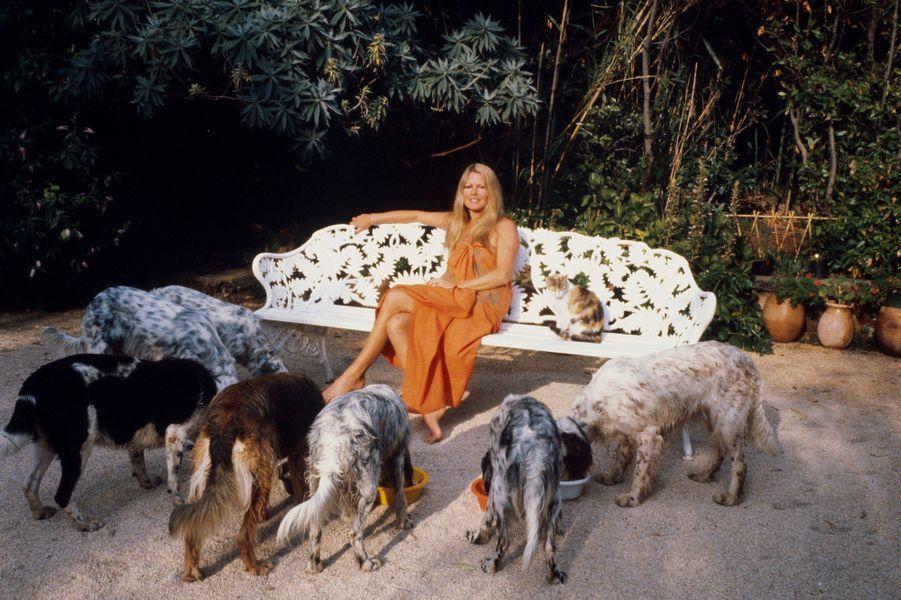 Brigitte BARDOT à Saint-Tropez entourée de ses chiens. Juillet 1980.