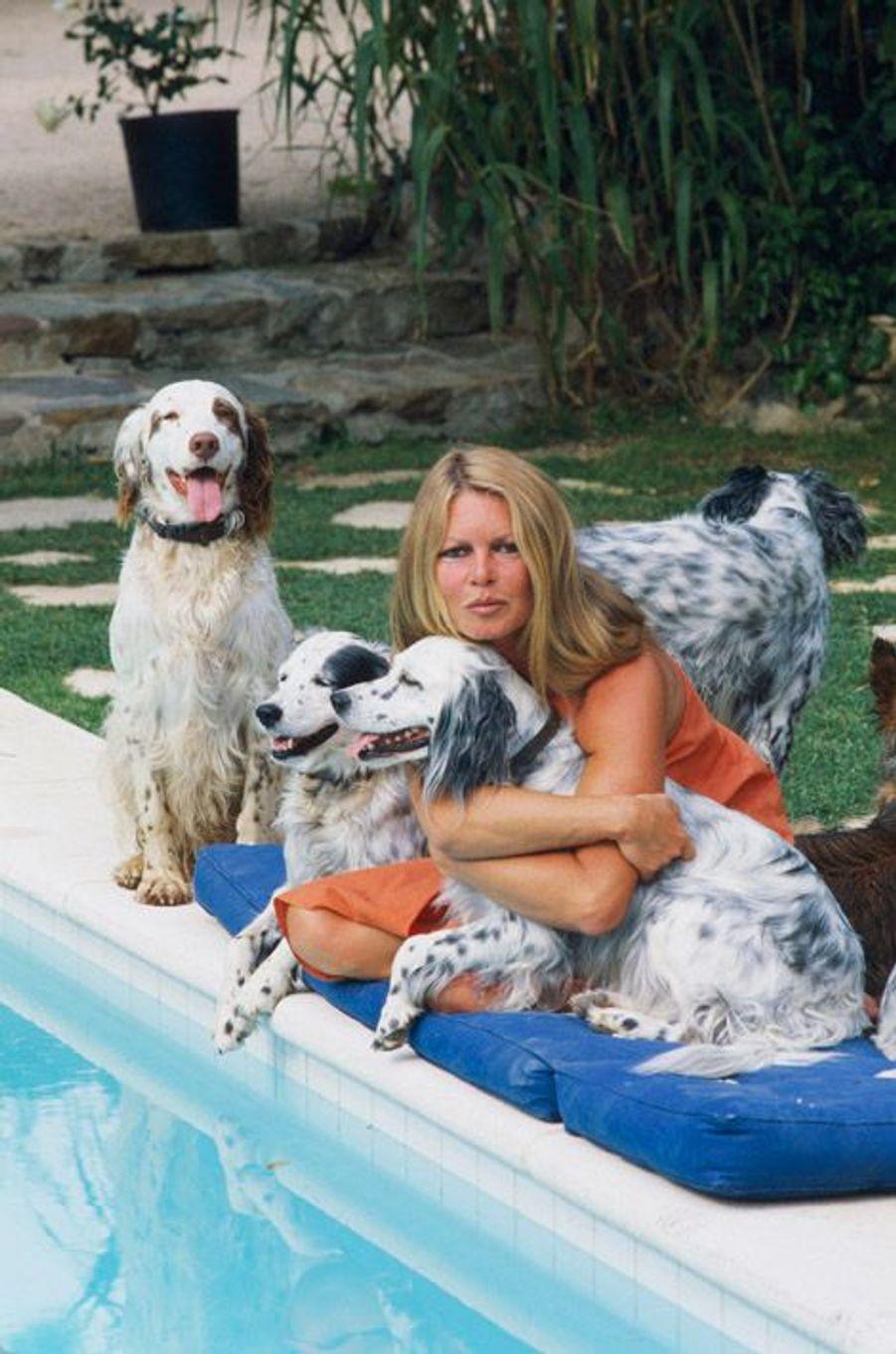 Brigitte BARDOT à Saint-Tropez avec ses chiens et un de ses chats. Juillet 1980.