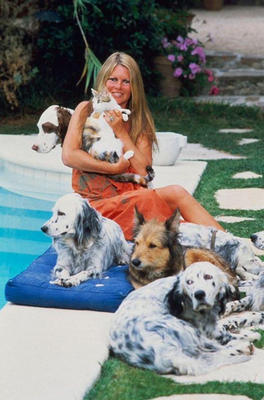 Brigitte BARDOT au bord de sa piscine à Saint-Tropez, entourée de ses chiens. Juillet 1980.