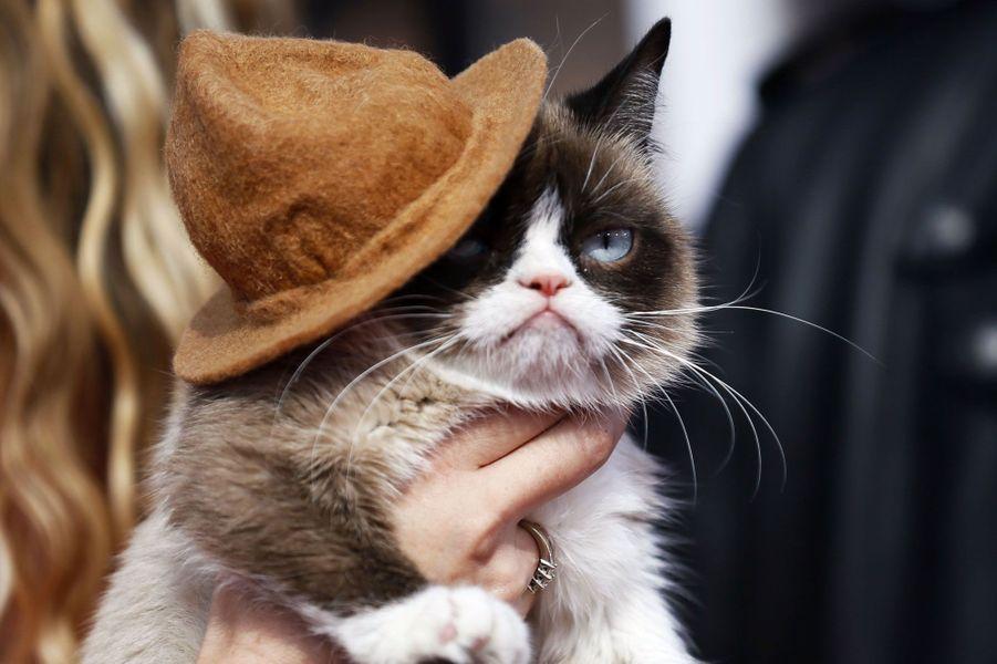 La star d'Internet, le fameux Grumpy Cat