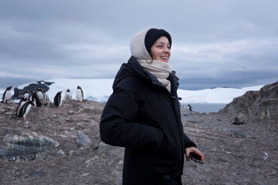 Marion Cotillard visite le 19 janvier 2020 l'île de la Trinité avec Greenpeace pour observer les penguins et les baleines.