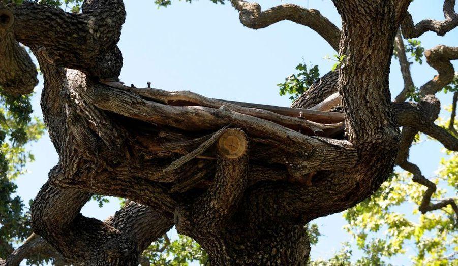 Michael Jackson avait fait construire cette plate-forme de bois dans les branchages du vieux chêne.